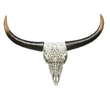 Crâne d'animal
