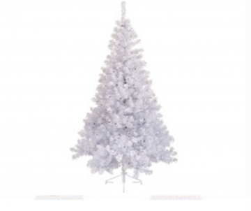 Sapin Imperial blanc