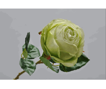 ROSE STEM GREEN 46cm