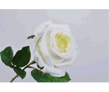ROSE STEM CREAM 46cm