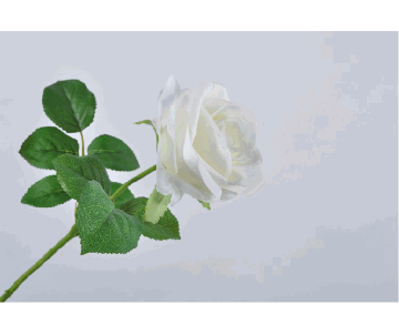 ROSE STEM WHITE 49CM