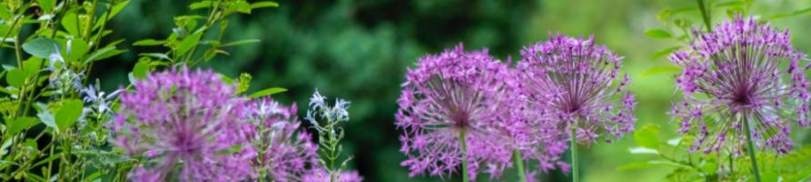 Plantes d´Extérieur