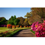 Arbustes & Plantes de haies