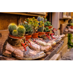 Cactus & Succulentes