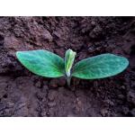 Matériel de semis